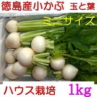 徳島産 ハウス栽培 かぶ/蕪/カブ ミニサイズ 玉と葉 約1kg(野菜)