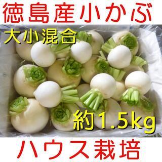 徳島産 ハウス栽培 かぶ/蕪/カブ 大小混合 玉だけ 約1.5kg以上(野菜)