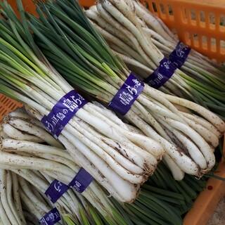 らっきょう 沖縄県伊江島産(野菜)