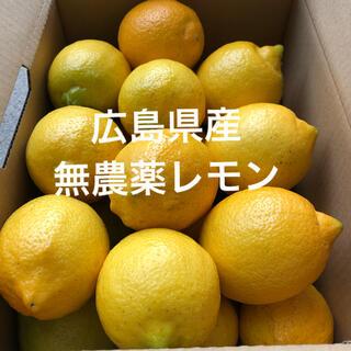 国産レモン 広島県産 無農薬 レモン 瀬戸内レモン 3kg  美品 産地直送(フルーツ)