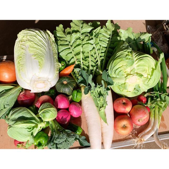 冬野菜と果物 食品/飲料/酒の食品(野菜)の商品写真