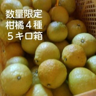 柑橘4種類 詰め合わせ 5キロ箱入り(フルーツ)