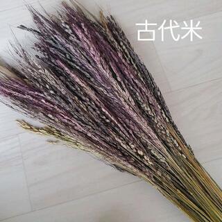 彩り古代米 ドライフラワー スワッグ リース 素材に♪(ドライフラワー)