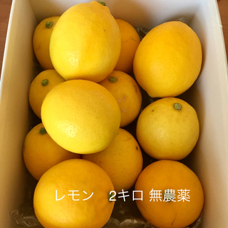 レモン 無農薬 2キロ【残りわずかです】(フルーツ)