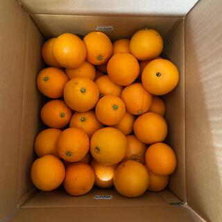 愛媛県産 産地直送 ネーブルオレンジ (サイズ混合)9kg(箱込み)(フルーツ)
