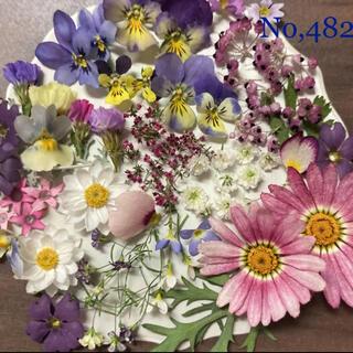 No,482   小花ミックス ドライフラワー素材(ドライフラワー)