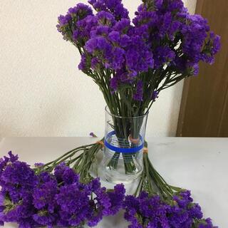 ドライフラワー スターチス 紫(ドライフラワー)