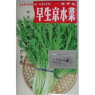 サラダ用早生京水菜 固定種 有機種子 野菜の種 ハーブの種 家庭菜園 水耕栽培(野菜)
