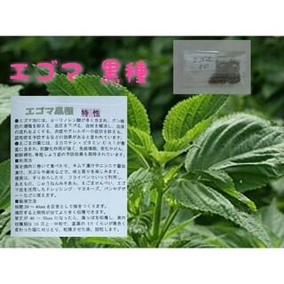 エゴマ 黒種 固定種 有機種子 野菜の種 ハーブの種 家庭菜園 水耕栽培(野菜)