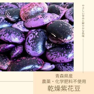 【農薬・化学肥料不使用】乾燥紫花豆 約500g 青森県産 2020年産(野菜)