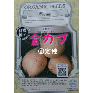 金カブ 固定種 家庭菜園 水耕栽培 野菜の種 ハーブの種(野菜)