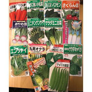 野菜の種 5種類セット 小分け(野菜)