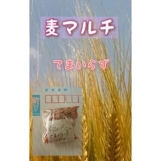麦マルチ てまいらず 家庭菜園 野菜の種 ハーブの種 緑肥 マルチ 土壌改良(野菜)
