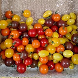 訳ありカラフルミニトマト箱込み1キロ(野菜)