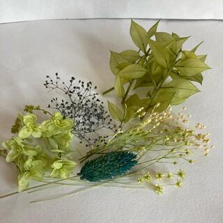ハーバリウム花材 グリーン系(ドライフラワー)