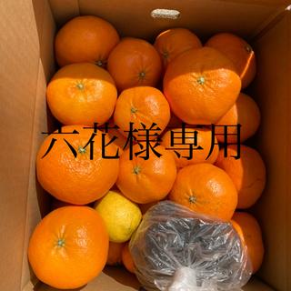 六花様専用 5kg(フルーツ)
