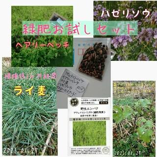 緑肥 お試し5点MIX 野菜の種 ハーブの種 家庭菜園 固定種 有機種子(野菜)