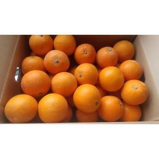 【農家直送】ネーブルオレンジ 送料込 コンフィ等のお菓子作りにも(フルーツ)