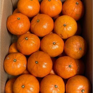 【プチサイズ】希少品種「べにばえ」天草産和製オレンジ 30個(フルーツ)