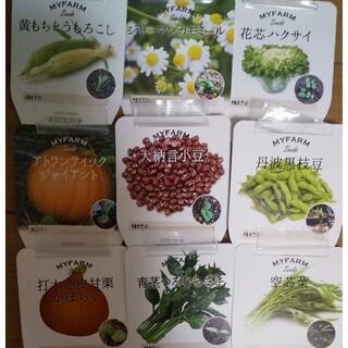 ☆追加☆野菜の種6種類お選びください(*^^*)(野菜)