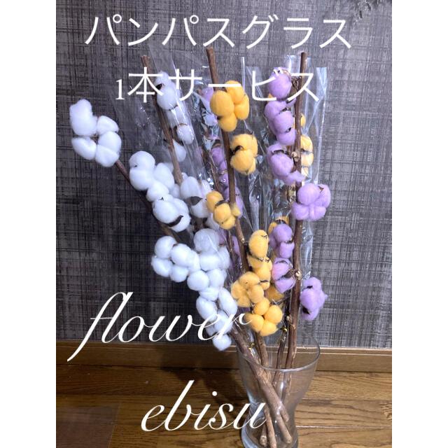 コットンフラワー 2本 ドライフラワー花材 ハンドメイドのフラワー/ガーデン(ドライフラワー)の商品写真