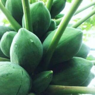 R10『青パパイヤ 10キロ』島野菜 タイアジア食材 グリーンパパイヤ(野菜)