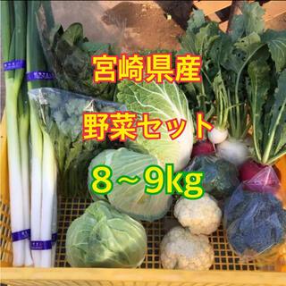 宮崎県産 野菜セット 8~9kg(野菜)