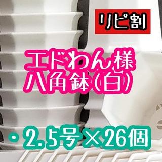 エドわん様 八角鉢(その他)