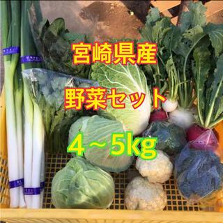 宮崎県産 野菜セット 4~5kg(野菜)