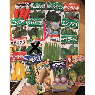 野菜の種 4〜8種類セット(野菜)