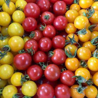 ミニトマト 3色 3kgセット!(野菜)