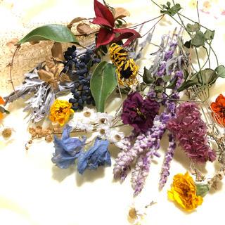 [お得パック]ドライフラワー 15種類 リース  花材 素材 ナチュラル J(ドライフラワー)