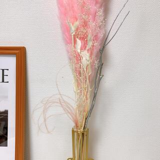 パンパスグラス テールリード ピンク ホワイト 韓国インテリア ゴールド(ドライフラワー)
