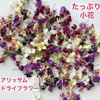 アリッサム ドライフラワー  小花 花材 レジン ハンドメイドアクセサリー(ドライフラワー)