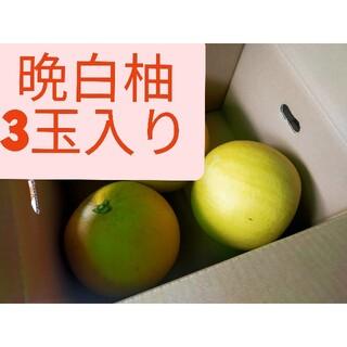 晩白柚、3玉入り、熊本産(フルーツ)