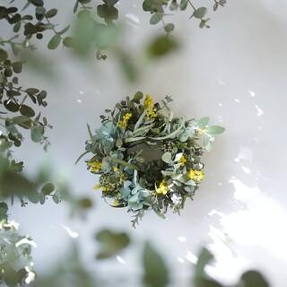 立春の庭のミモザリース(ドライフラワー)