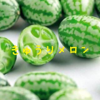 きゅうりメロン 種(その他)