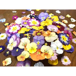 銀の紫陽花が作った彩りビオラ➕ふんわりプリムラのドライフラワー山盛り70冠‼️(ドライフラワー)