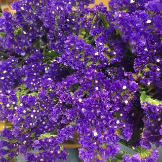 ドライフラワー スターチス 癒しと平和の紫(ドライフラワー)