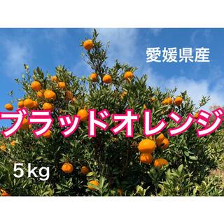 愛媛県産ブラッドオレンジ5キロ(フルーツ)