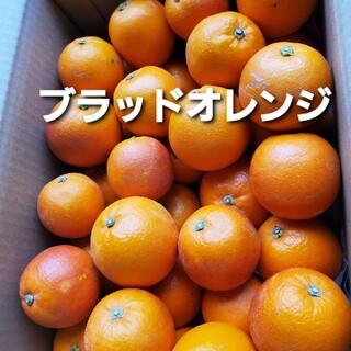 希少 熊本産 ブラッドオレンジ 5キロ 優品(フルーツ)