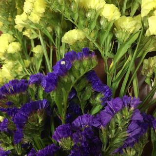 ドライフラワースターチス 紫 黄色(ドライフラワー)