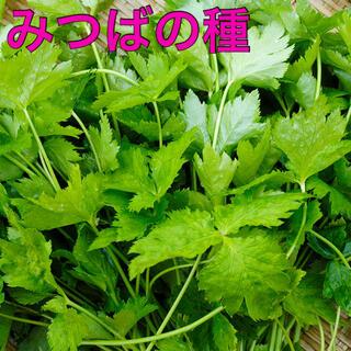 みつば タネ 50粒(野菜)