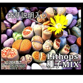 リトープス mix種子 50粒+α 発芽説明入り(その他)