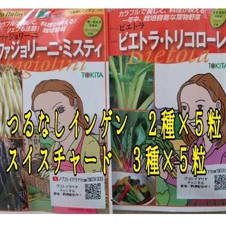 カラフルインゲンとスイスチャードの種(野菜)