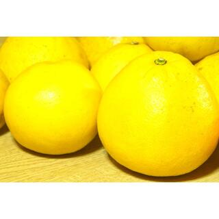 【 土佐 文旦 2.5キロ 】【正規市販品・傷有無混合】フルーツ 果物 みかん(フルーツ)
