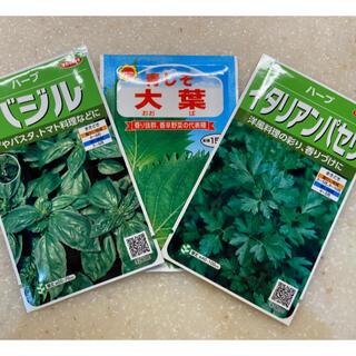 【プランター栽培】大葉100粒、バジル30粒、イタリアンパセリ30粒(野菜)