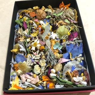 [訳あり品]花材増量パック 大 小花と花びらと葉と木の実 ドライフラワー M(ドライフラワー)