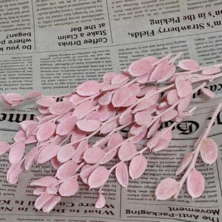 【花材】フィビキア ウォッシュピンク(ドライフラワー)
