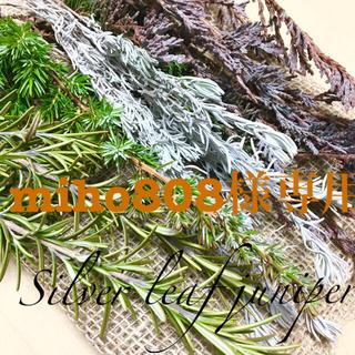 香り立つ無農薬 ビャクシン類とシルバーピンクガーランド(ドライフラワー)
